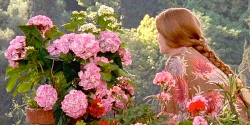 A midwinter Enchanted April.jpg