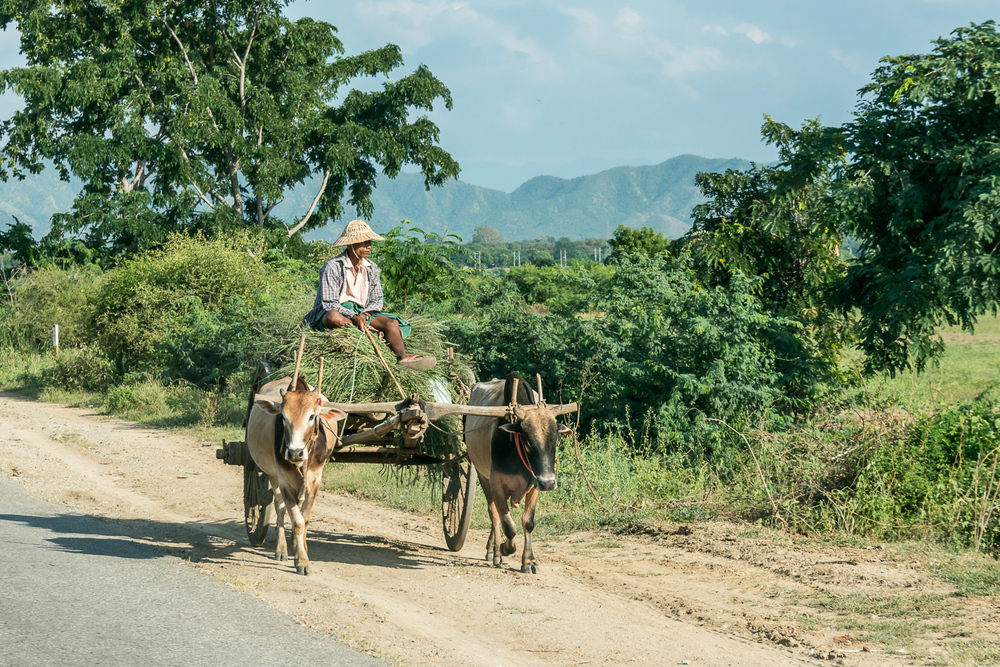 RichardSilver_Project1_Myanmar_01.jpg