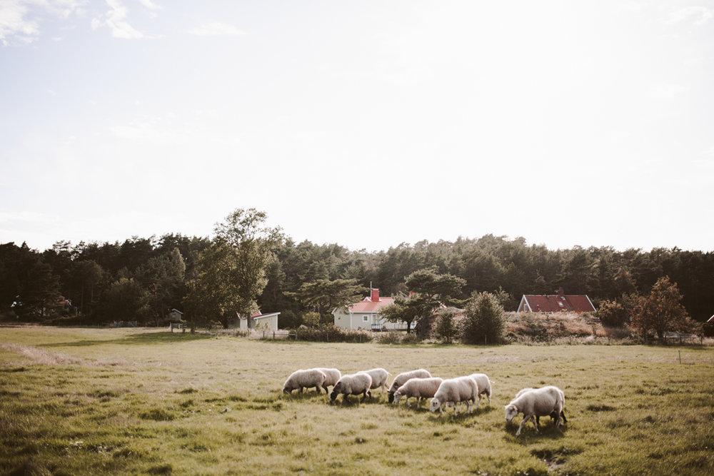 sweden wedding photos-98.jpg