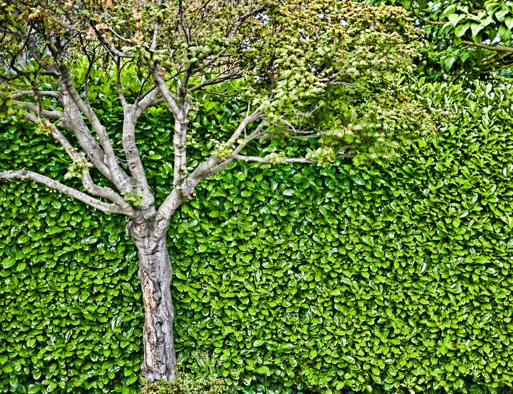 22_TREE.jpg