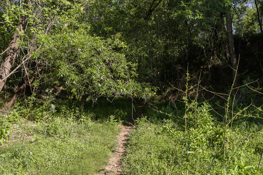 Trail-6.jpg