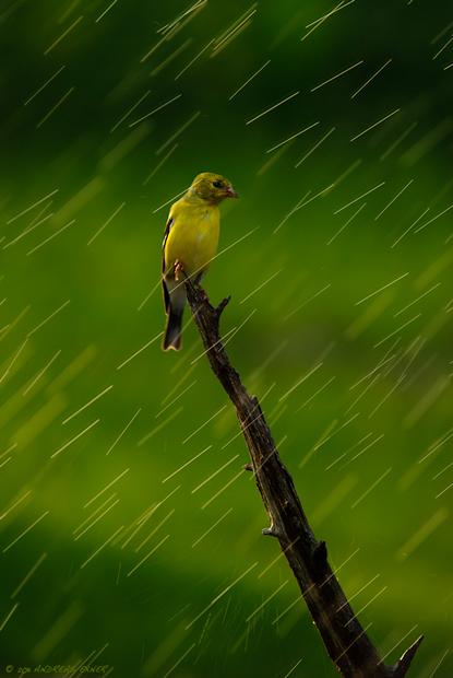Rain and magic light