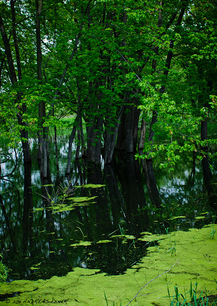 Green Island Wetlands 2