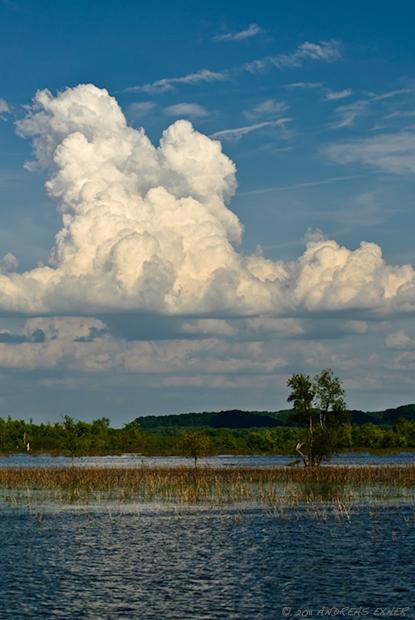 Green Island Wetlands 1