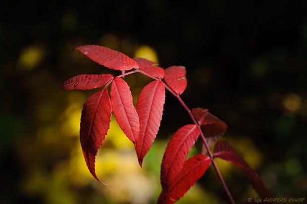 Autumn 2011-1