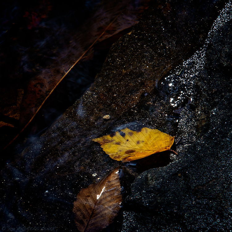 Leaves in a creek