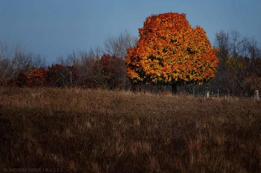 Tree in the prairie