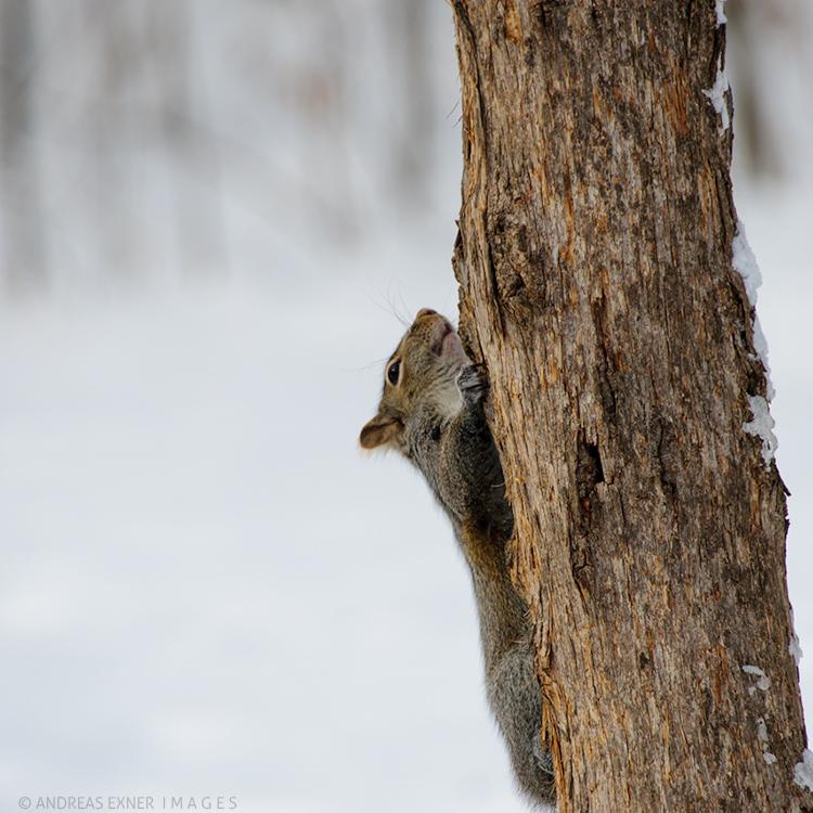 Testshot squirrel