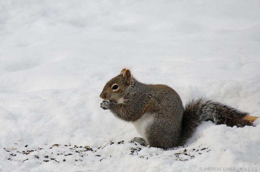 Test shot squirrel 2