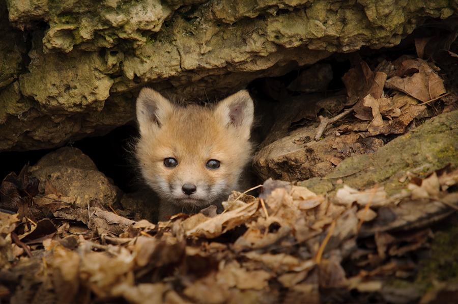 Peeking pup