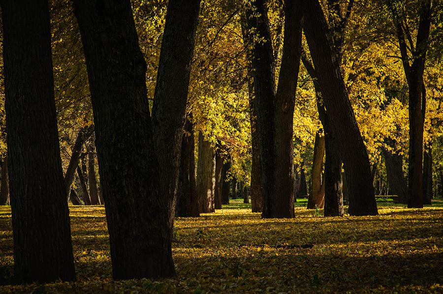 Fall at its peak