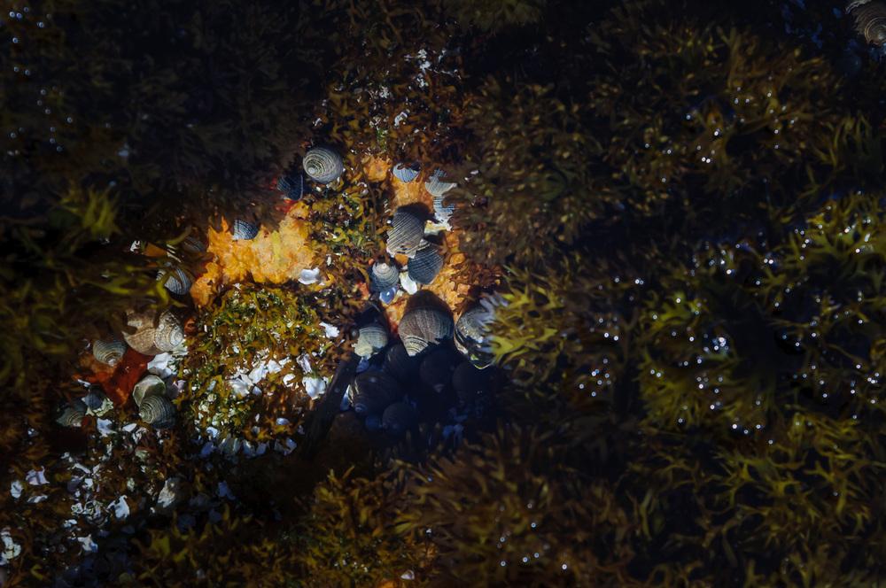 Tide Pool, Wonderland Trail, Acadia National Park