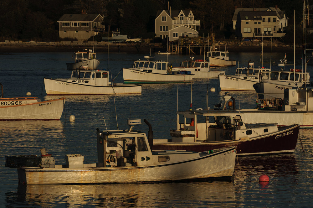 Lobster boats in setting sun, Bass Harbor