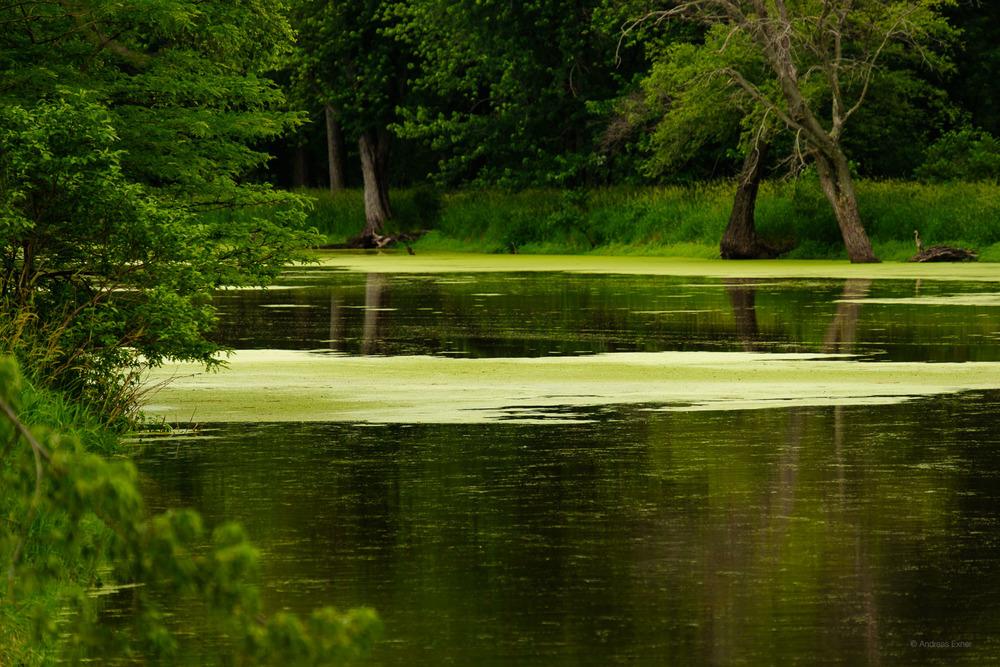 Green Island Wetlands, Iowa