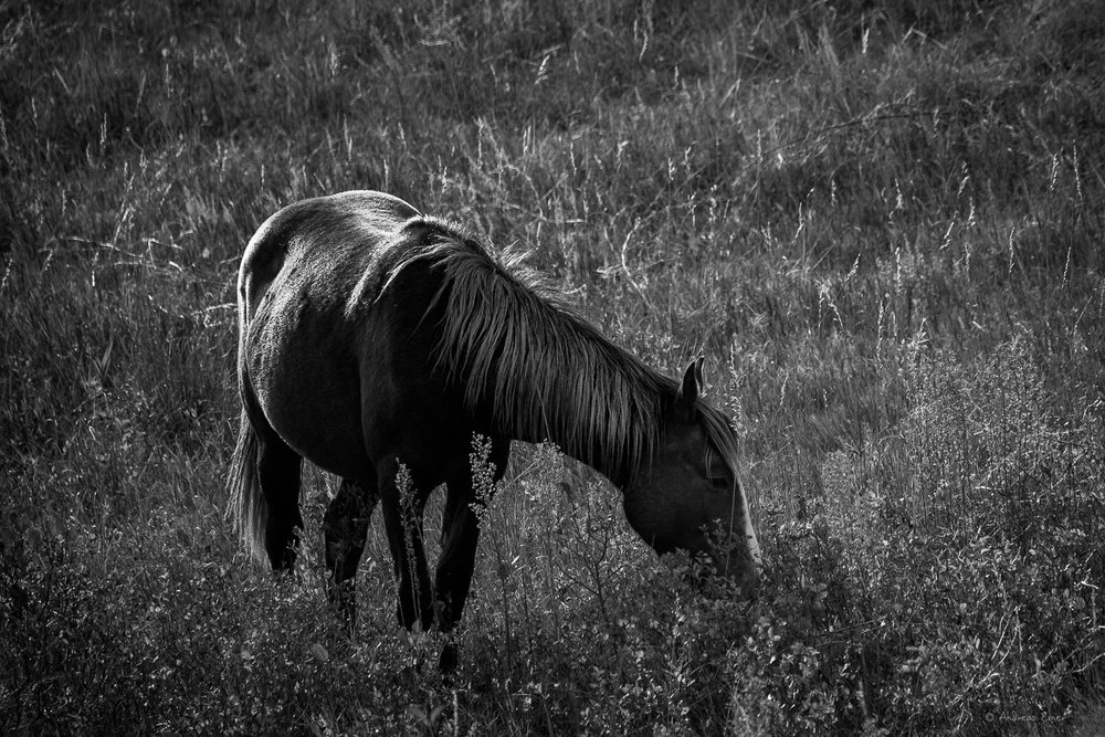 Wild Horse, Theodore Roosevelt National Park ----