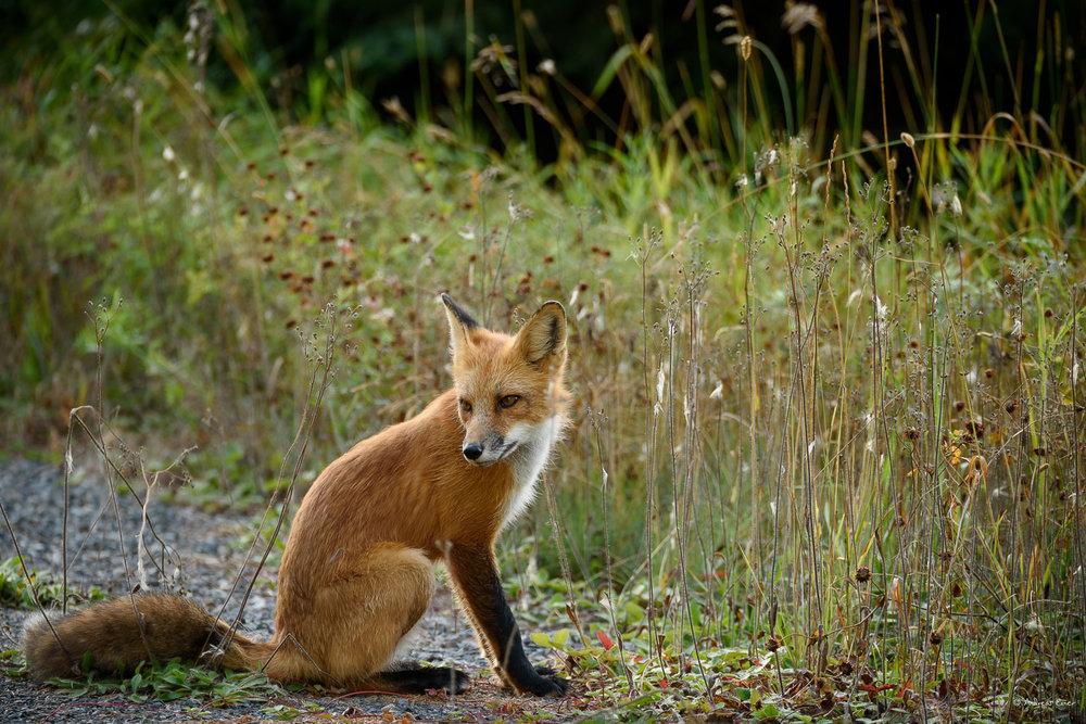 Sleeping Giant Provincial Park, Ontario, Canada,Nikon D750, Sigma 150-600mm / f5-6.3 DG OS HSM Sports Lens -----
