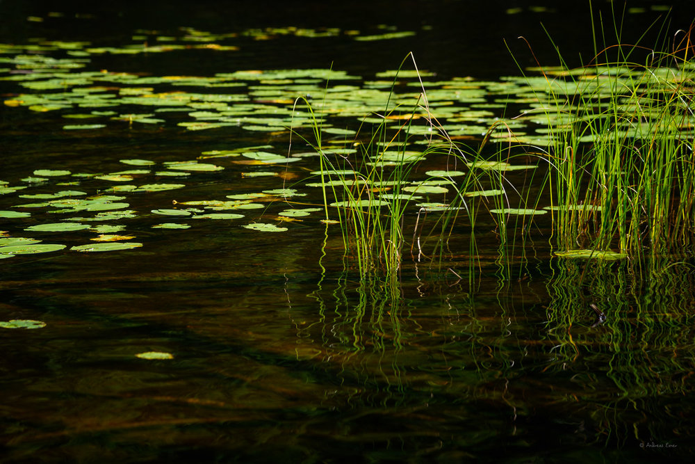 Ravine Lake, Sleeping Giant Prov. Park, Ontario, Canada ---------