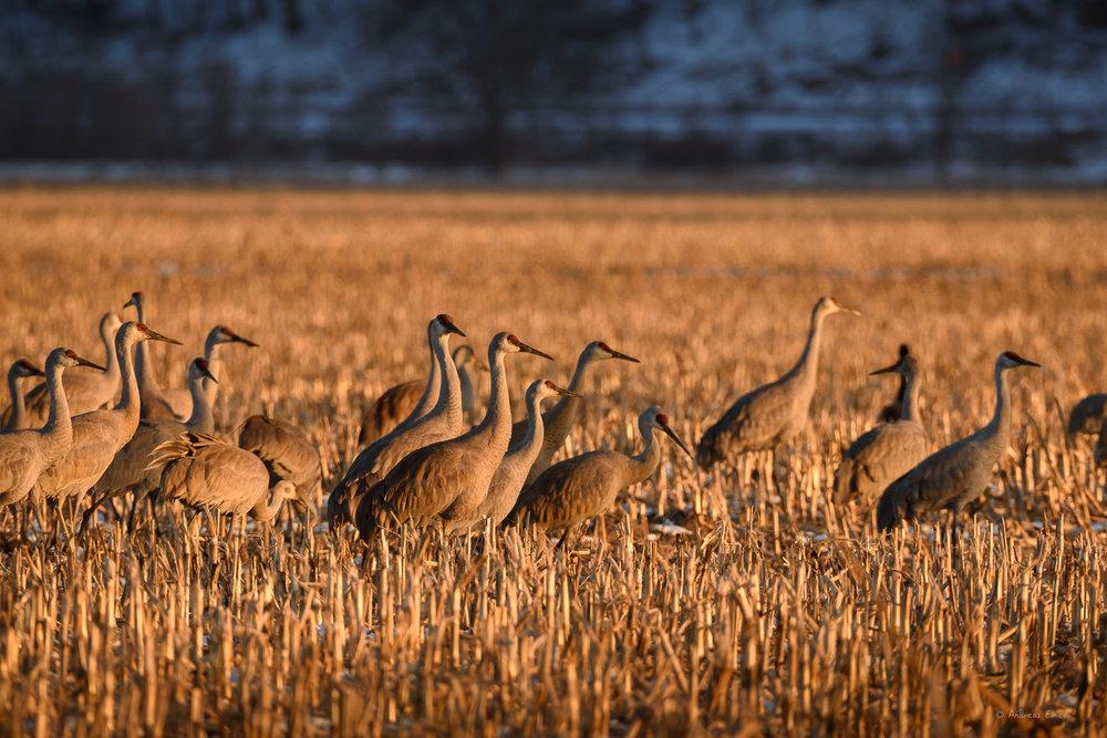 Green Island Wetlands, Iowa ------