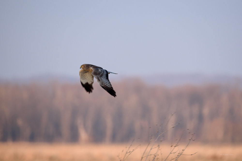Green Island Wetlands, Iowa --------