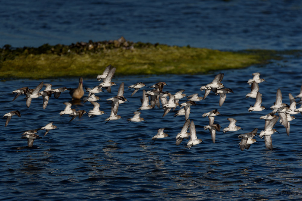 Bolsa Chica Ecological Reserve, Huntington Beach, California ---------