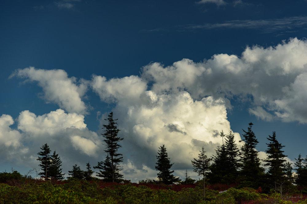 Dolly Sods Wilderness, West Virginia --------