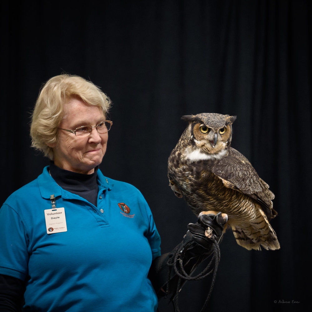 TSKILI, Great Horned Owl, was stolen from her nest by a human who wanted her as a pet.