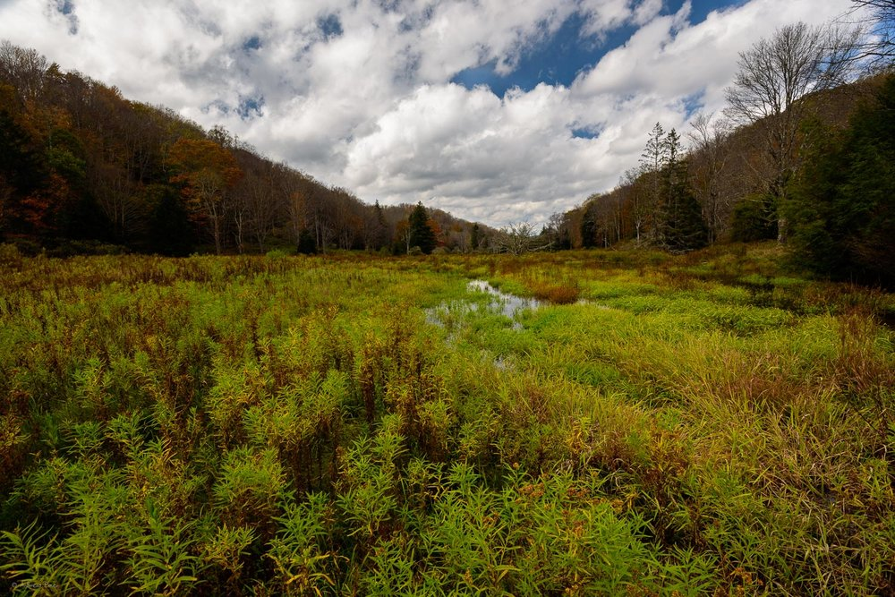 Cranberry Wilderness, Monongahela National Forest, West Virginia