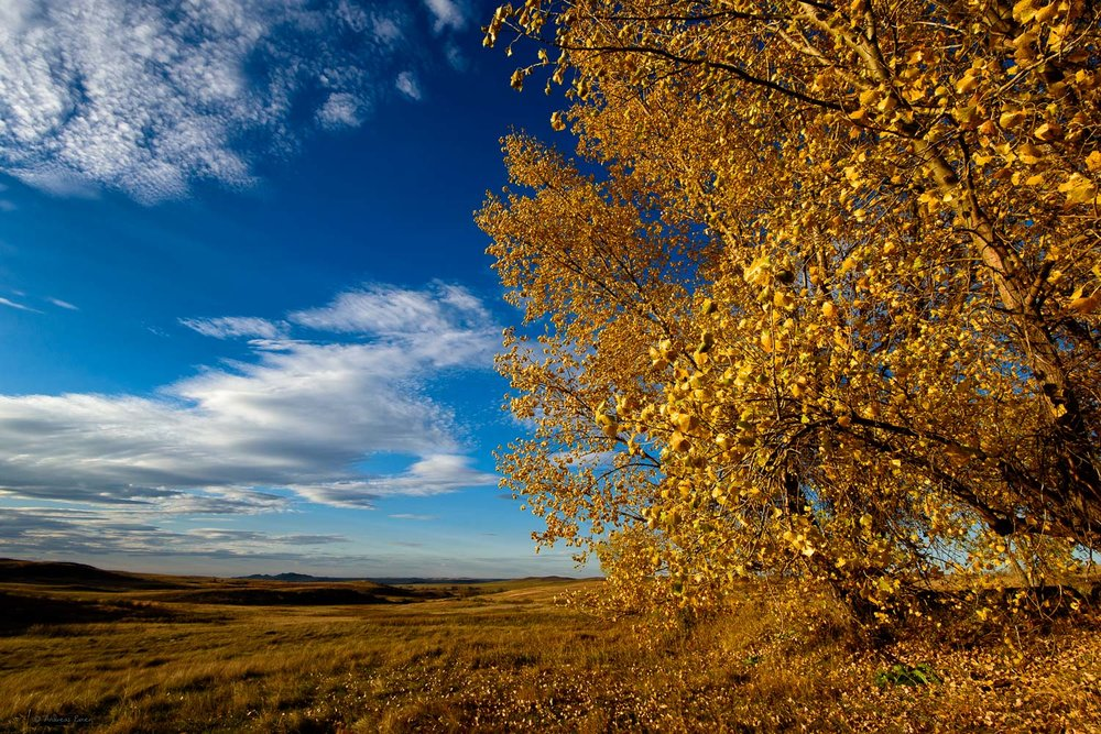Fall in Theodore Roosevelt NP- North unit, ND