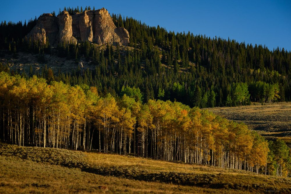 Rock cliffs and aspen grove, Bighorn Mountains, Wyoming