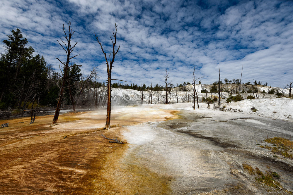 Upper terraces, Mammoth Hot Springs, Yellowstone NP, Wyoming