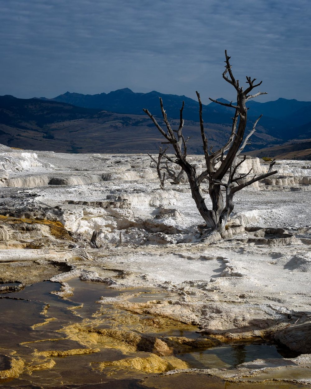 Lower terraces area, Mammoth Hot Springs