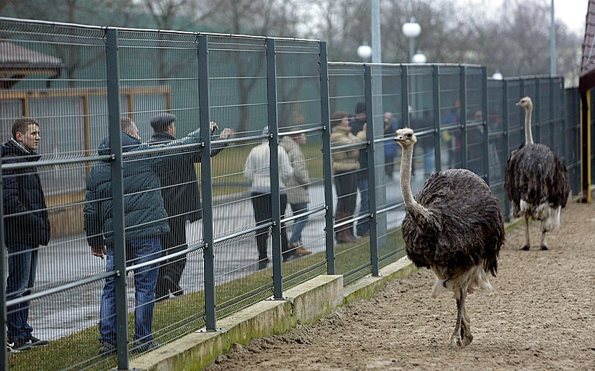 Ostrich in private zoo. Picture: KONSTANTIN CHERNICHKIN/REUTERS