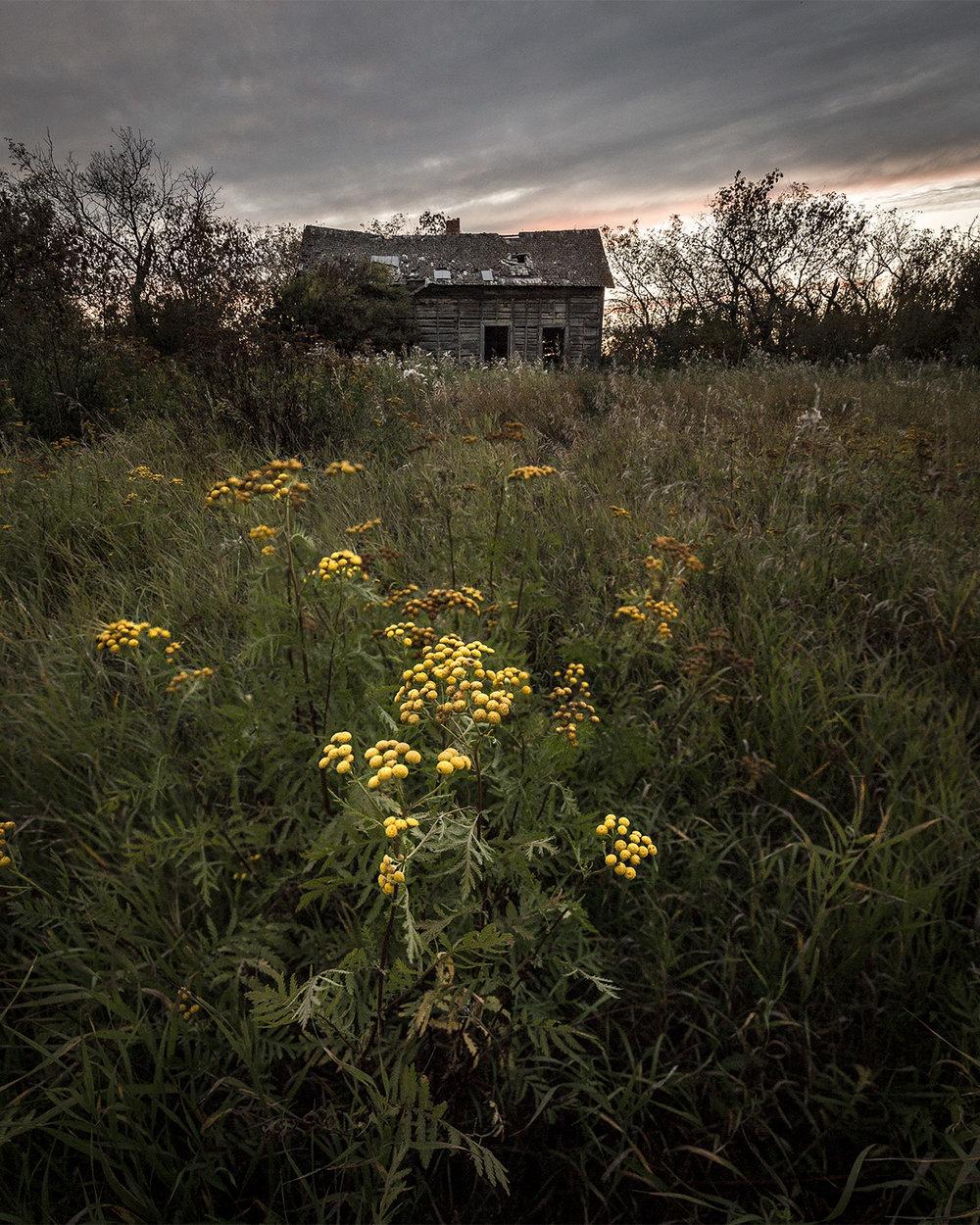 Flowerhouse1.jpg