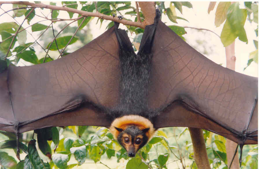 yes, I'm a giant frigging bat with a mink collar worthy of a Tzar -- and what of it?