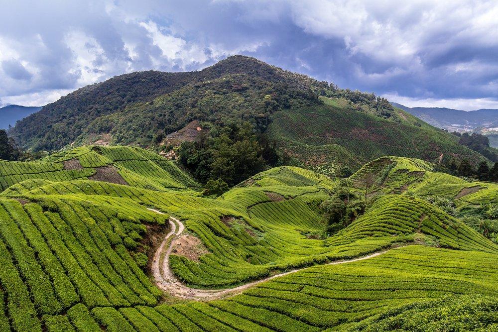 malaysia-1536865_1920.jpg