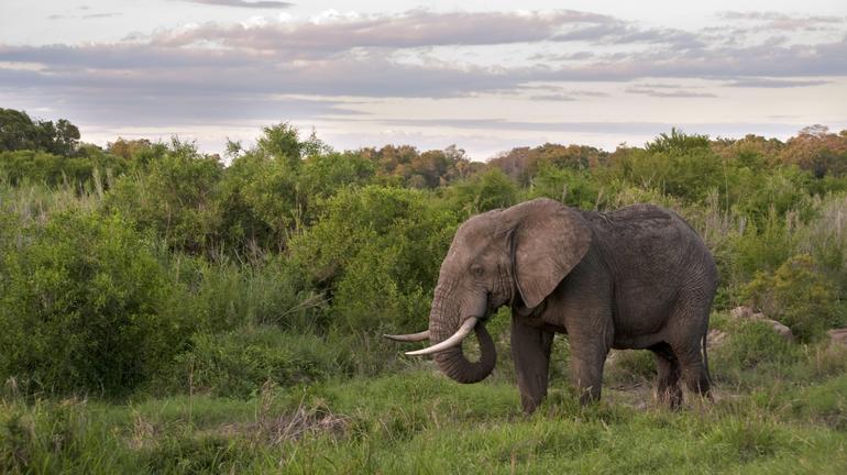 Kruger 6.jpg