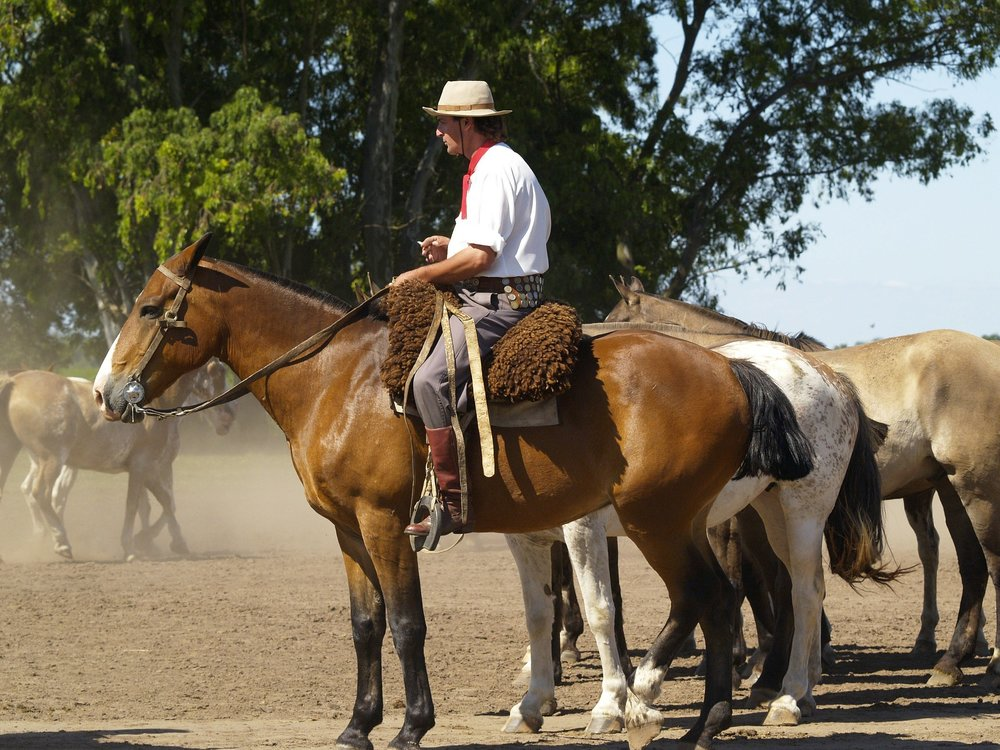 argentinie horses-52701_1920.jpg