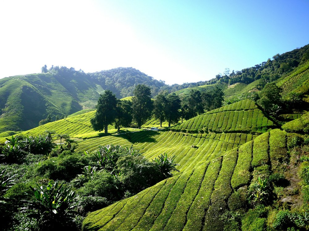 maleisie tea-plantation-261515_1920.jpg