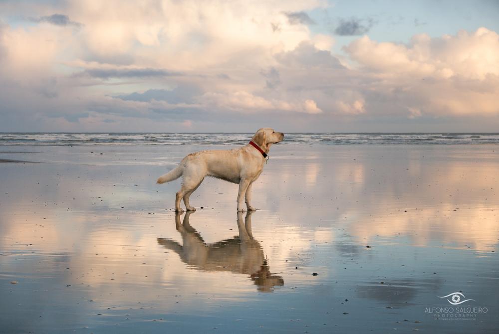 Luna at Murlough beach