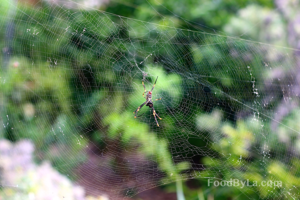 Botanic Spider.JPG