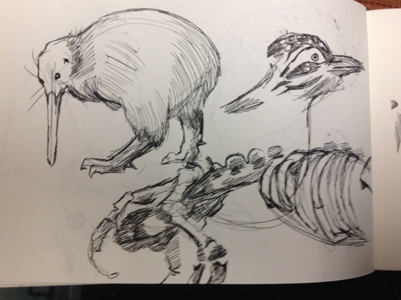 Kiwi, Wood Pecker, and part of a Panda Skeleton.