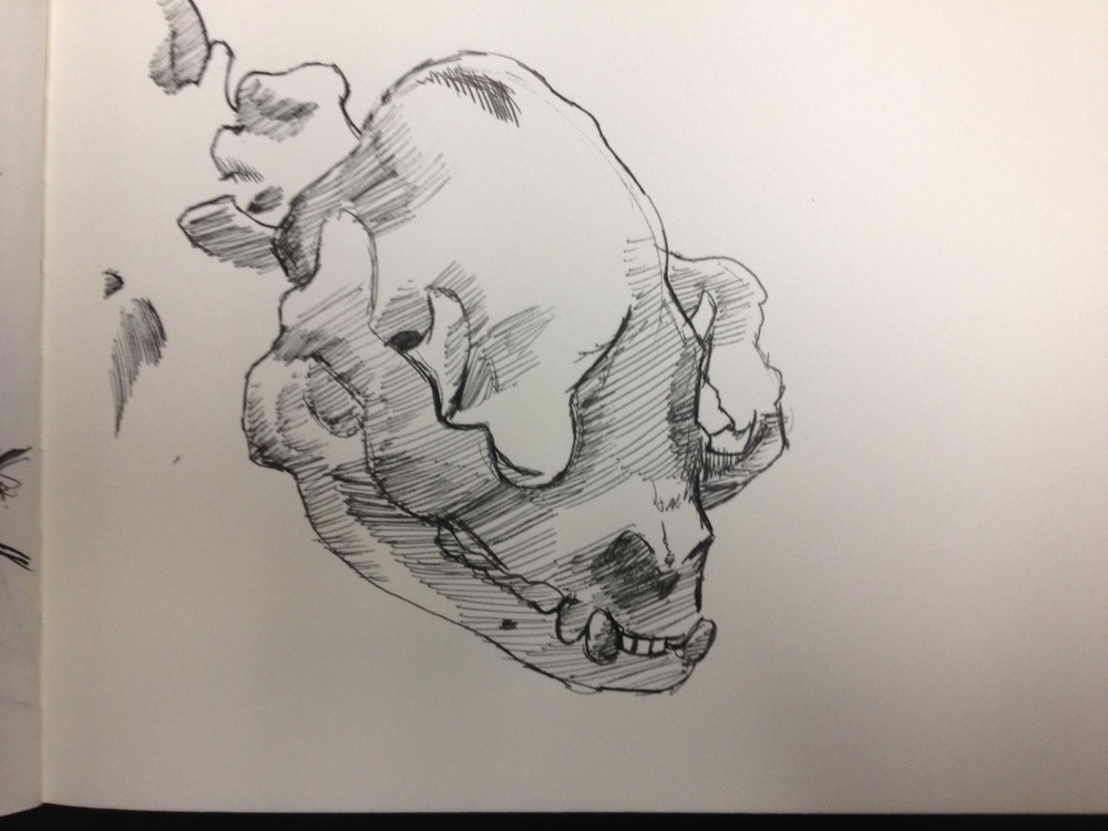 My favorite sketch of the day, Panda Skull.