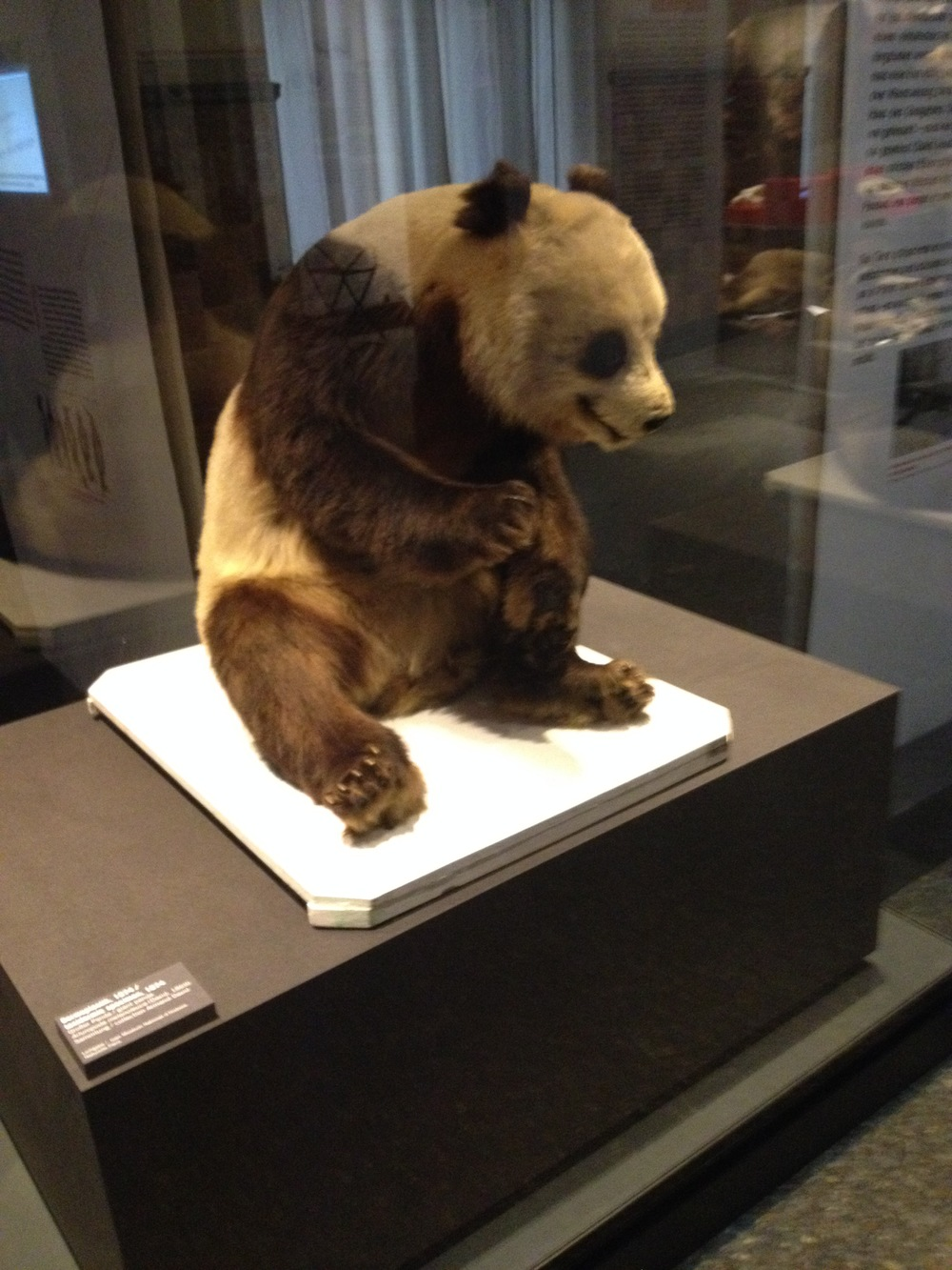 old Panda.JPG