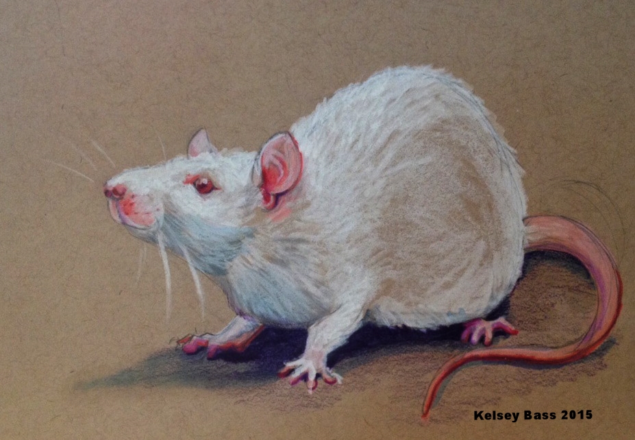 A study of an albino rat. Prisma Color pencil, Sharpie white paint, Prisma color marker on toned tan paper