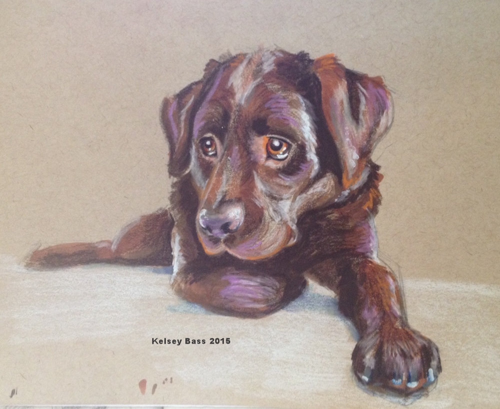 Chocolate Lab . Prisma Color pencil, Sharpie white paint, Prisma color marker on toned tan paper