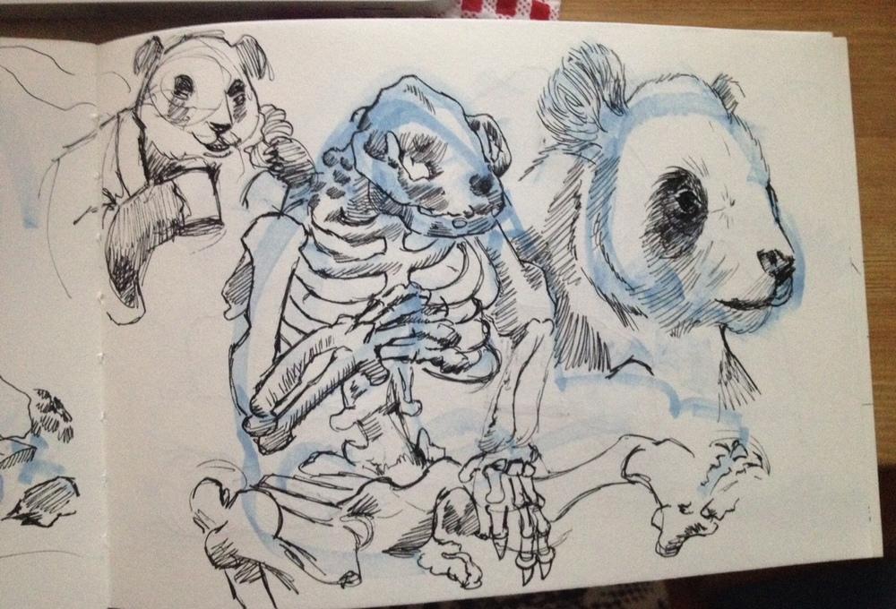 Panda studies.jpg