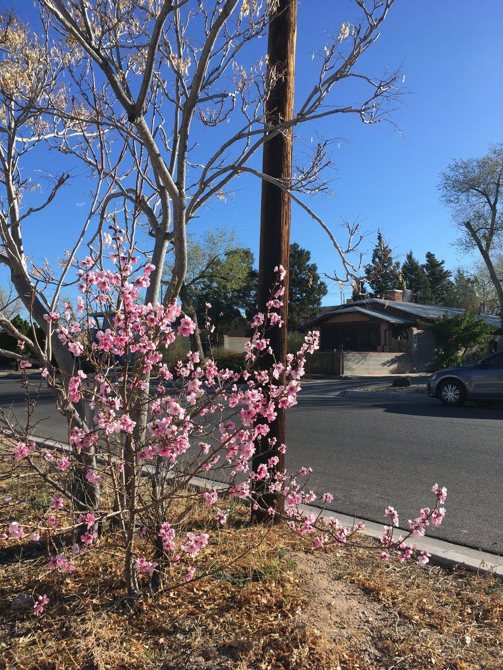 Spring (5).jpeg
