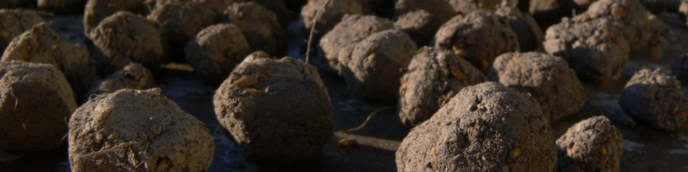 Seed bombs.jpg