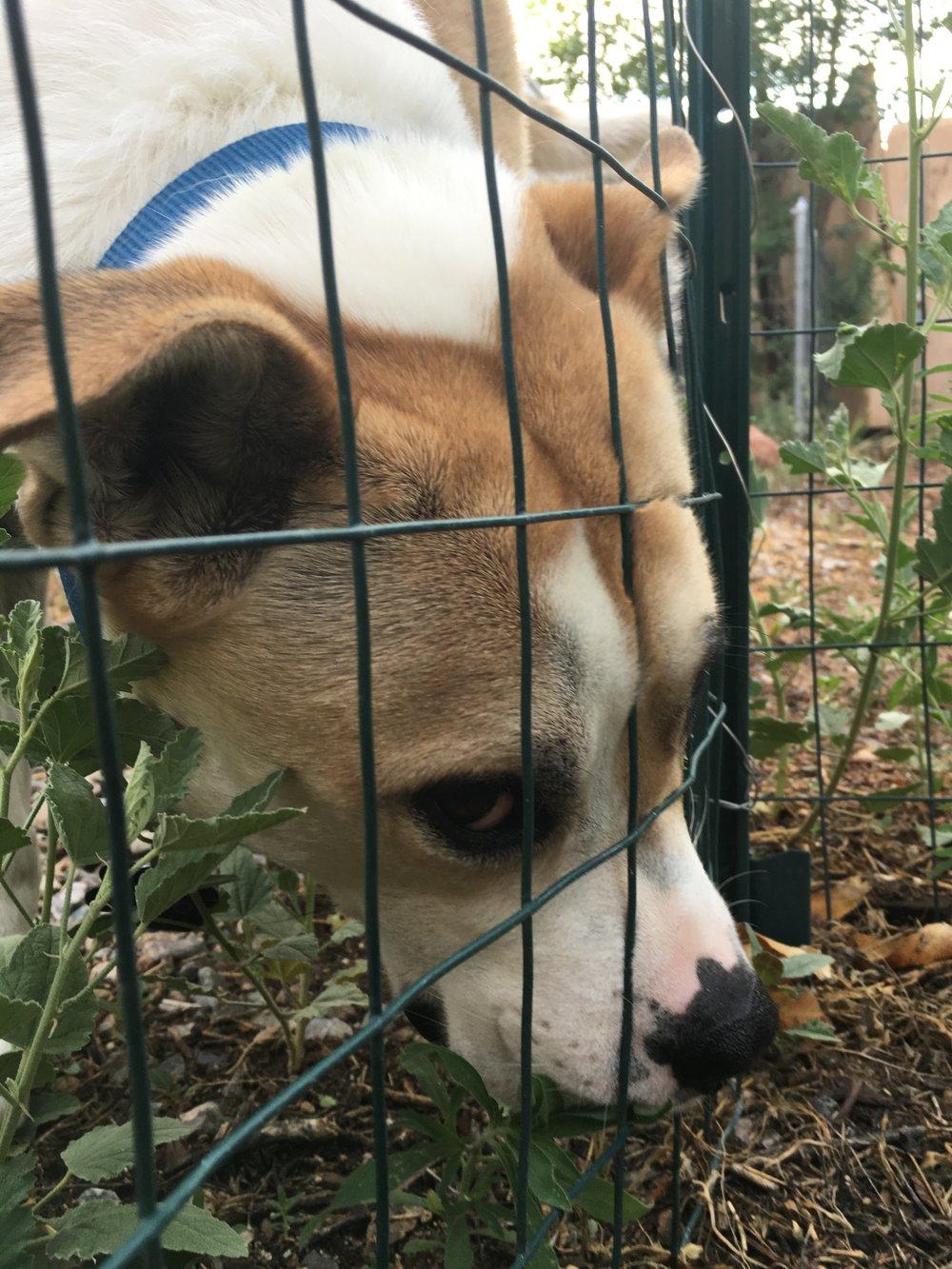 Doggo (4).JPG