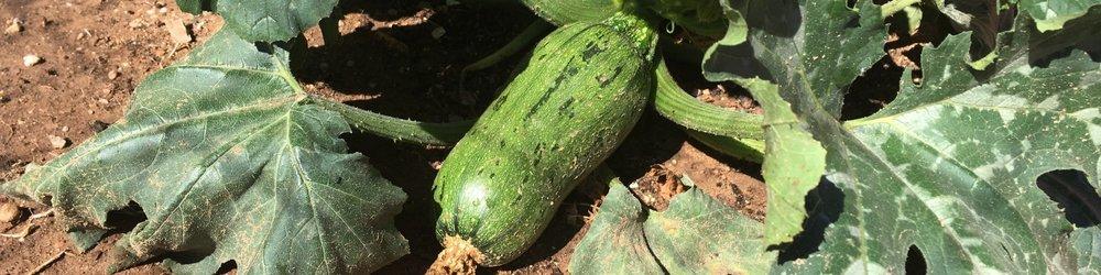 Pumpkin growth (3).jpeg